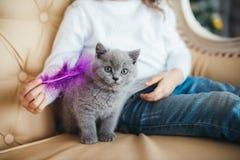 Enfant étreignant un jeune chat de pli d'écossais Photos libres de droits
