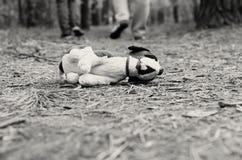 Enfant absent Jouet abandonné solitude Image noire et blanche Photos stock