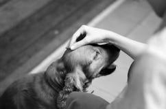Enfant avec un chien Image stock