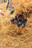 Enfant ayant le foin jeté en l'air à sa tête Images stock