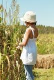 Enfant dans un domaine de maïs Image stock