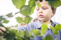 Enfant dans un jardin Photo stock