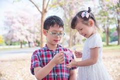Enfant de mêmes parents jouant avec la fleur en parc Photos stock