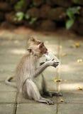 Enfant des singes Image stock