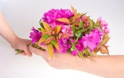 Enfant donnant la fleur Photographie stock libre de droits