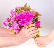 Enfant donnant la fleur Photo libre de droits