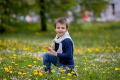 Enfant doux, garçon, recueillant des pissenlits et des fleurs de marguerite Photo libre de droits