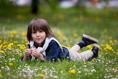 Enfant doux, garçon, recueillant des pissenlits et des fleurs de marguerite Image libre de droits