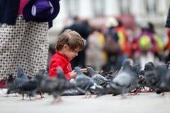 Enfant en bas âge alimentant les pigeons Photos stock