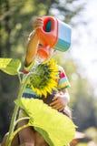 Enfant en bas âge arrosant un tournesol Photos libres de droits