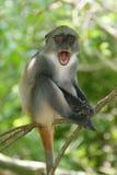 Enfant en bas âge de singe Image libre de droits