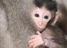 Enfant en bas âge effrayé des macaques de Balinese Photographie stock libre de droits
