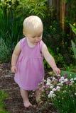 Enfant en bas âge en fleurs roses de cueillette Photos stock