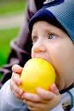 Enfant en bas âge mangeant une pomme Photo libre de droits