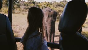 Enfant enthousiaste de petite fille observant le grand éléphant mûr très étroit de l'intérieur de la grande voiture de safari en  clips vidéos