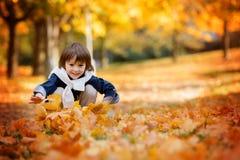 Enfant heureux, garçon, jouant en parc, feuilles de lancement, jouant Images stock