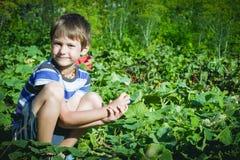 Enfant heureux sélectionnant les légumes frais dans le jardin au jour d'été Famille, sain, faisant du jardinage, concept de mode  Images stock