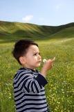 Enfant mâle avec une marguerite Photographie stock libre de droits