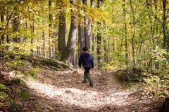 Enfant marchant dans une forêt Image stock