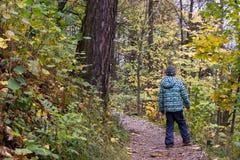 Enfant marchant dans une forêt Images stock