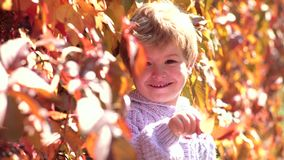 Enfant mignon s'asseyant sur les feuilles tombées par automne en parc L'enfant heureux rit l'extérieur sur le fond de feuilles d' banque de vidéos