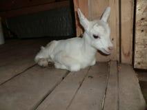 Enfant nouveau-né heureux blanc sur le plancher en bois photos stock