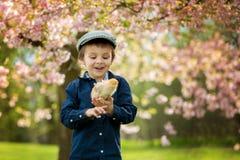 Enfant préscolaire adorable mignon, garçon, jouant avec de petits poussins photographie stock libre de droits