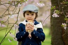 Enfant préscolaire adorable mignon, garçon, jouant avec de petits poussins photos libres de droits