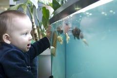 Enfant regardant des poissons Photographie stock libre de droits