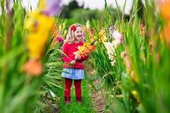 Enfant sélectionnant les fleurs fraîches de glaïeul Photo stock