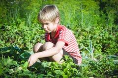 Enfant sélectionnant les légumes frais dans le jardin au jour d'été Famille, sain, faisant du jardinage, concept de mode de vie Photos stock