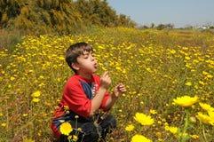 Enfant soufflant un pissenlit Image stock