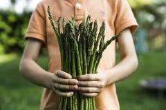 Enfant tenant l'asperge verte dans des ses mains Photographie stock libre de droits