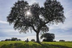 Enfantez basculer un enfant dans des ses bras sous l'arbre de gland Image libre de droits