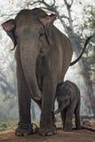 Enfantez l'éléphant et son veau au centre d'élevage d'éléphant, SA Photos libres de droits