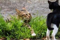 Enfantez le chat avec des chatons jouant joyeux à l'arrière-plan Images stock