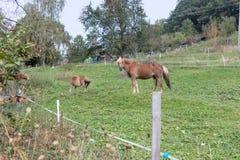 enfantez le cheval avec son poulain un jour d'automne en septembre près du stu Photographie stock