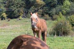 enfantez le cheval avec son poulain un jour d'automne en septembre près du stu Photographie stock libre de droits