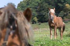 enfantez le cheval avec son poulain un jour d'automne en septembre près du stu Photo stock