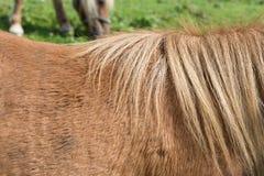 enfantez le cheval avec son poulain un jour d'automne en septembre près du stu Images stock