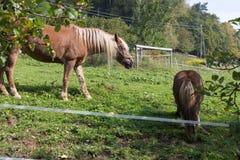 enfantez le cheval avec son poulain un jour d'automne en septembre près du stu Photos stock