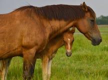 Enfantez le cheval et son poulain de bébé en été Photos libres de droits
