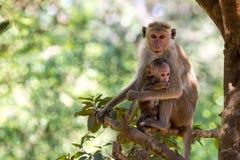 Enfantez le singe avec son bébé mignon avec la forêt à l'arrière-plan Photos stock