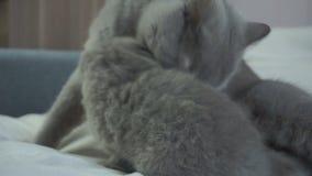 Enfantez un chat punit un chaton désobéissant clips vidéos
