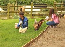 Enfants alimentant des poulets Images libres de droits