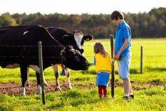 Enfants alimentant la vache à une ferme Photos libres de droits