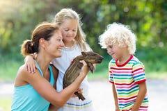 Enfants avec l'animal de porc de bébé Enfants à la ferme ou au zoo Photographie stock libre de droits