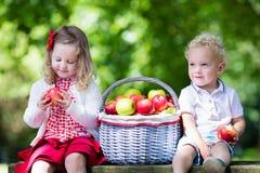 Enfants avec le panier de pomme Photo libre de droits