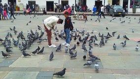 Enfants avec le pigeon Image stock