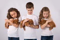 Enfants avec les chiots rouges d'isolement sur le fond blanc Amitié d'animal familier d'enfant Photos libres de droits